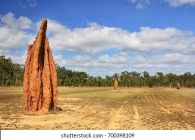A close up of many cathedral termite mound