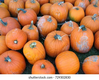 Close up of many pumpkins with dirt on them