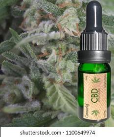 close up of marijuana and CBD oil