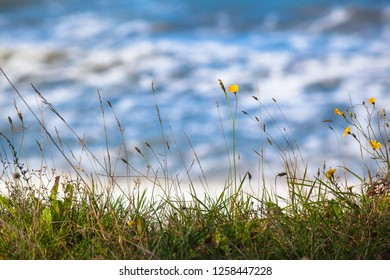 Close up of meadow grass with small yellow blossoms at edge of seashore (copy space)