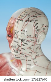 Close up of medical dummy