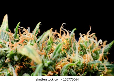 close up of medical marijuana plant bud