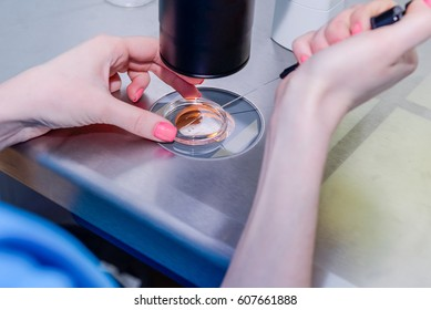 Close up Medical research technician putting some substance into Petri dishusing under the microscope in a laboratory of a Clinic of Reproductive medicine, selective focus