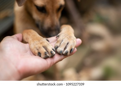 Close up Men's hand is holding on to the dog's feet.