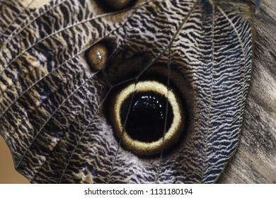 close up of the mimicry of the wings of a butterfly