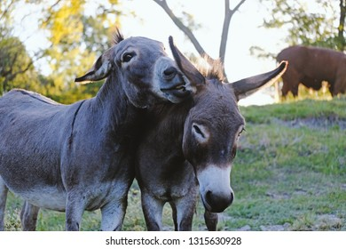 Mini Donkey Images, Stock Photos & Vectors | Shutterstock