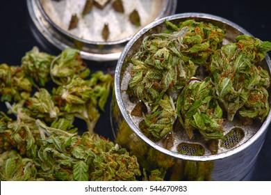 Close up of  Mini Sour Diesel medical marijuana buds in grinder