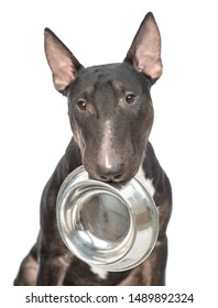 Close up miniature bull terrier dog holding bowl in mouth. isolated on white background