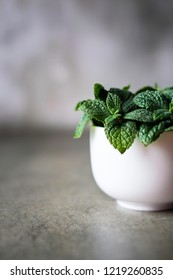 Close up of mint bunch in white vase on the table.