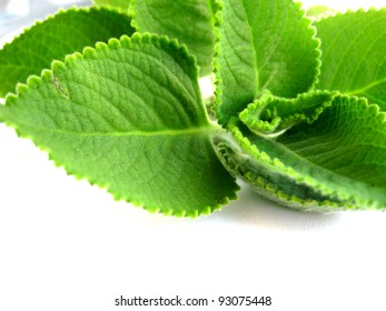 a close up for mint leaves, texture of food.
