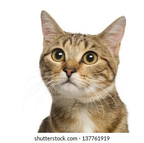 Close up of a Mixed-breed cat, 9 months old, isolated on white