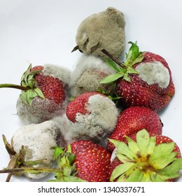 Close- up Moldy Strawberry