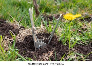 Close up of a mole scissor trap in the ground - Shutterstock ID 1967438359