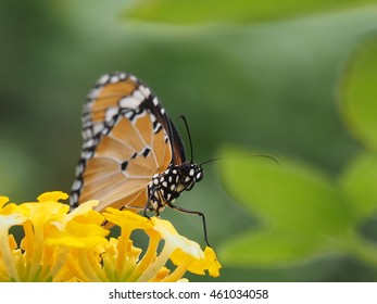 close up of monarch butterfly perched on yellow flower