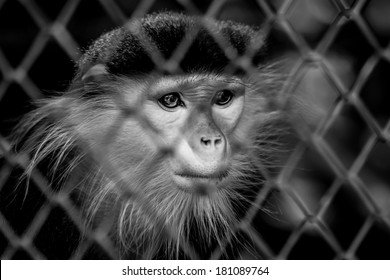 Close up of a monkey in Dusit zoo, Thailand
