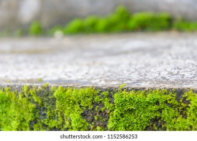 Close up of mos textures background. Landscape view of green natural mos on old stone background. abstract of stone with fern leaf after rain. Green mos background use for nature projects design.