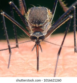 Close up with mosquito in action.