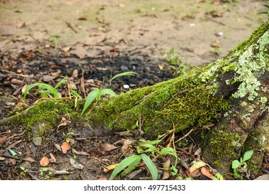 Close up of moss covered on trees