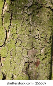 close up of moss covered tree bark
