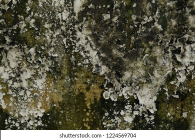 Close up moss and lichen on the damp wall, it look dirty and hard to cleaning, may be have mold and fungus to stick or destroy wall. Black green and white look dirty concept. Zoom view on wall.