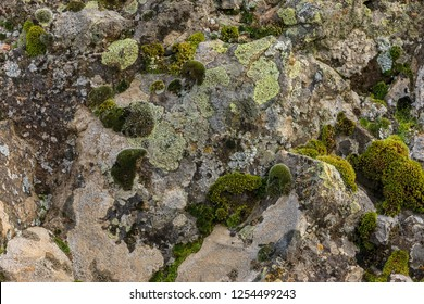 A close up of moss and lichen on the side of a large rock in eastern Washington.