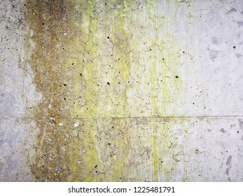 close up moss on concrete floor surface, dirty texture on cement background, abstract stains on damp wall