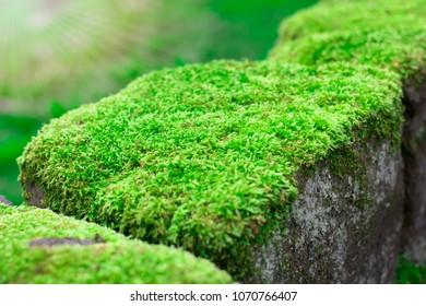 close up moss on the walls backgrounds
