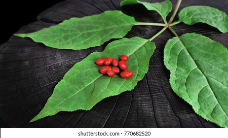 A close up of the most famous medicinal berrys ginseng (Panax ginseng).