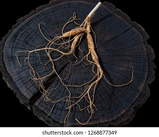 A close up of the most famous medicinal plant ginseng (Panax ginseng). isolated