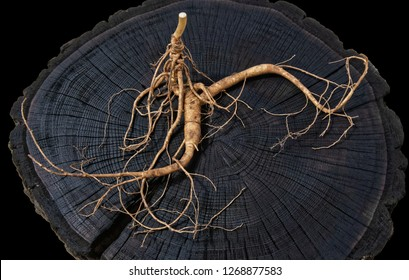 A close up of the most famous medicinal plant ginseng (Panax ginseng). isolated on black
