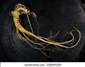 A close up of the most famous medicinal plant ginseng (Panax ginseng). Root ginseng.