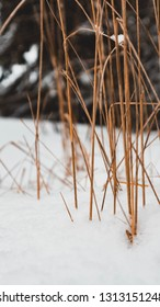 Close Up mountain grass with fresh snow