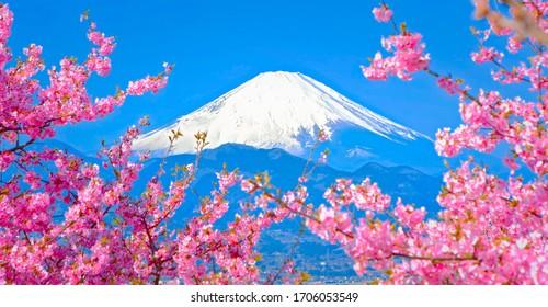 Close up of Mt. Fuji at Kawaguchiko lake, Yamanashi Prefecture during hanami festival with full bloom of cherry blossom