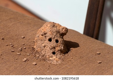 Close up of a mud dauber wasp nest made by a solitary wasp out of mud with entry and exit holes