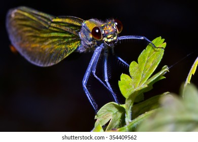 Close up of a multicolor dragonfly on leaf