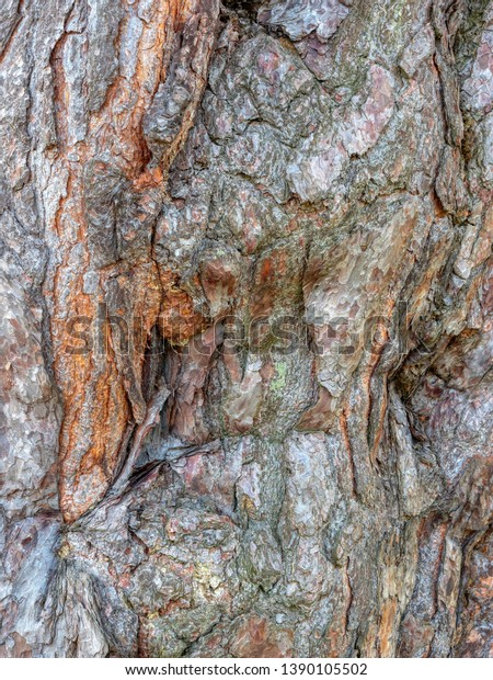 Close Multicolored Rough Bark Spruce Tree Royalty Free Stock Image