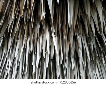 Close up natural dead dry leaves texture of tree called Petticoat Palm, Copernicia Macroglossa in science name