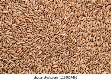 Close up of natural rye grains background