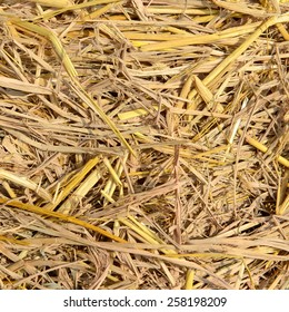 Close up of The natural Straw texture background.