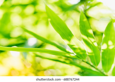 Close up nature of green leaf in park, natural green bamboo plant using as a background or wallpaper