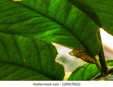 close up nature insect pupae