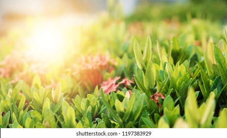 Close Up nature view of green leaf on blurred greenery background using as background and wallpaper.