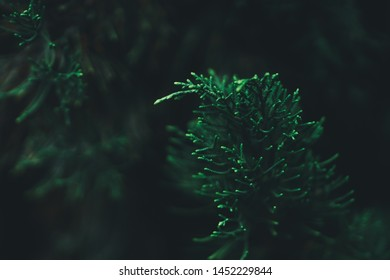 Close Up nature view of green leaf on blurred greenery background in garden with copy space using as background natural green plants landscape, ecology, fresh wallpaper concept