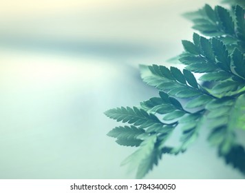 Close up of nature view green leaf on blurred greenery background under sunlight with bokeh and copy space using as background natural plants landscape, ecology wallpaper or cover concept. - Shutterstock ID 1784340050