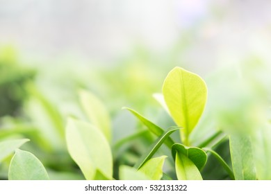 Close up nature view of green leaf in garden. Natural green plants landscape using as a background or wallpaper.