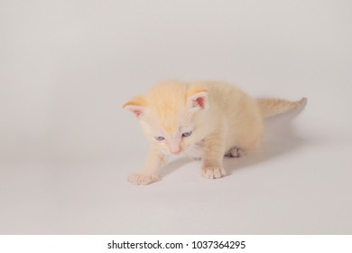 Close up new born cute white kitten sitting on the floor white background