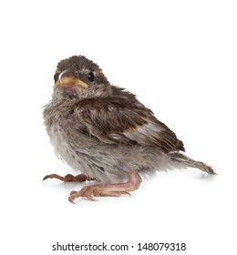 Close up of nice little bird on white background