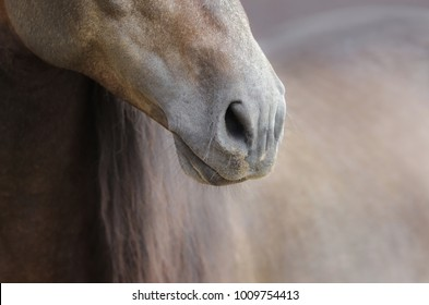 Close up of nose of horse on nature background in soft pastel colors.