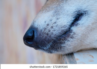Close up of nose and mouth a dog.