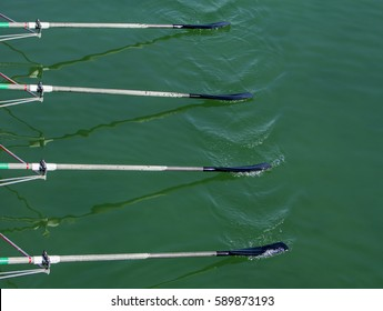 Close up oars of quadruple skulls rowing team race